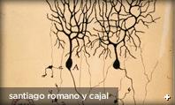 Purkinje - by Cajal